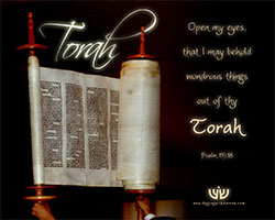 torah_thumb
