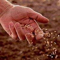 scattering seed